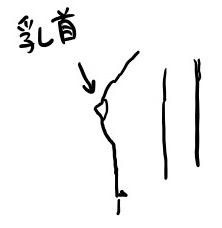乳首のイラスト