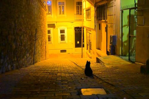 夜のイスタンブールの街にたたずむ黒猫