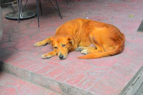 イスタンブールの街で寝そべる犬