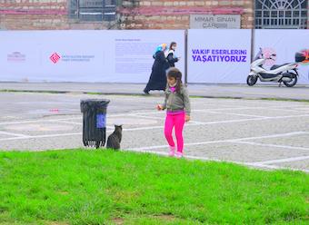 猫に餌を与える少女