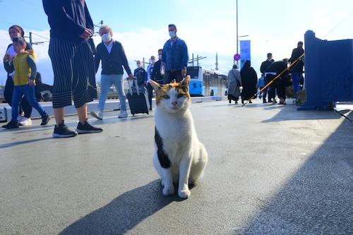 ガラタ橋で堂々と座る猫