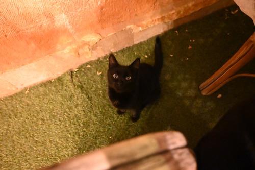 物欲しそうに見つめる黒猫ちゃん